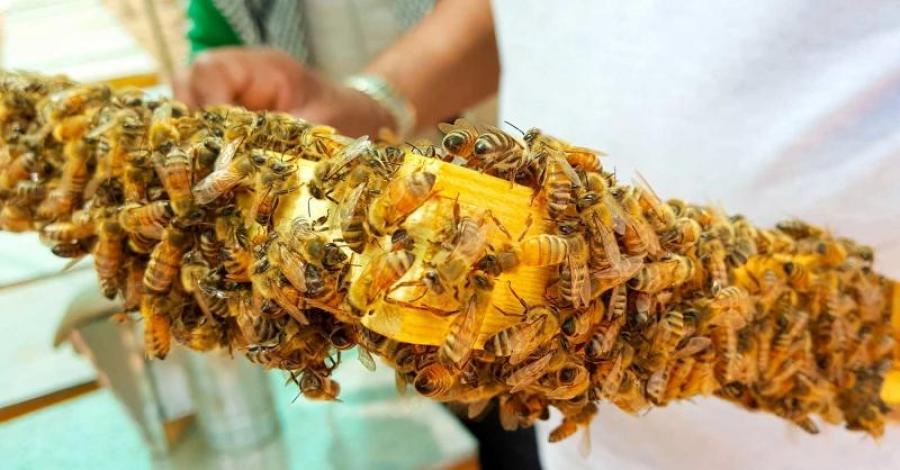 Proiectul USAID/APM lansează un apel de granturi pentru a stimula inițiativele educaționale în sectorul apicol